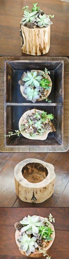 Cute DIY Planter - Bring a little bit of nature into your home or office! DIY Planter Of A Fallen Tree Piece #DIY #Garden
