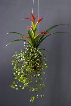 Hangis Botánica creativa