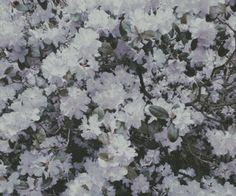 floral flowers pattern | Tumblr