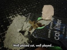 Well played cat…
