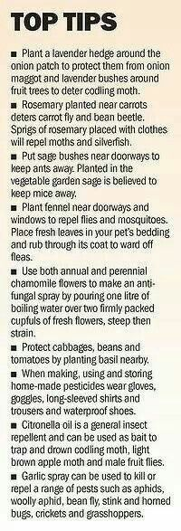 Simple Gardening Tips & Companion Planting