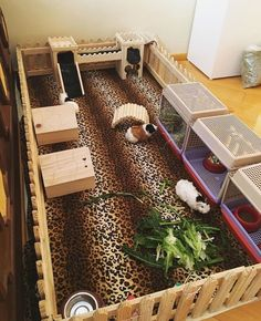 guinea pig cage ideas under bed \ guinea pig cage under bed . guinea pig cage ideas under bed . diy guinea pig cage under bed . guinea pig cage under loft bed Diy Guinea Pig Cage, Guinea Pig Hutch, Guinea Pig House, Pet Guinea Pigs, Guinea Pig Care, Cavy Cage, Pet Cage, Bunny Cages, Rabbit Cages