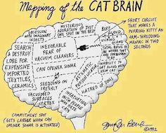 Mapping of the CAT BRAIN So funny!