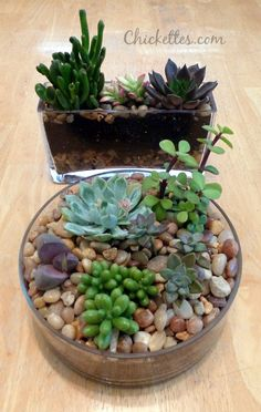 Succulents planted in glass containers
