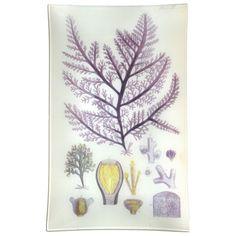 "#A British Island Seaweed (Purple LV) 10 x 16"" Rect. Tray"