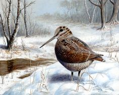 Woodcock in Winter