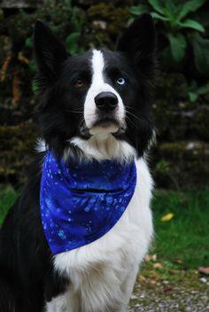 'Blue Walkies Dude'  blue dog bandana by Dudiedog Bandanas.  Beautiful 100% Benartex cotton, from £5.29. Handmade in the Yorkshire Dales