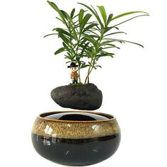 2018 japan magnetic levitation Floating Flowers Ceramic Flower Pot Birthday gift for men (no plant) Bonsai Plants, Bonsai Garden, Garden Trees, Garden Pots, Small Plants, Small Trees, Air Plants, Succulent Pots, Planter Pots