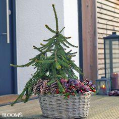 Die 44 Besten Bilder Von Herbst Winterdeko Auf Dem Balkon