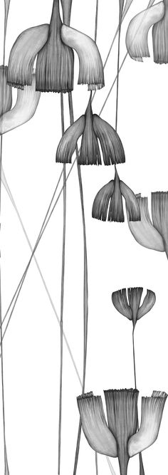 Piet Boon Styling by Karin Meyn | Flowers illustrated with east indian ink