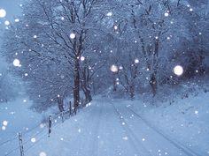 I love to walk in the stillness of snowfall