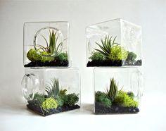 Stackable Living Eco Cube / Modern Air Plant Glass Terrarium via egardenstudio on Etsy