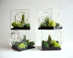 Stackable Living Eco Cube / Modern Air Plant Glass Terrarium via egardenstudio on Etsy