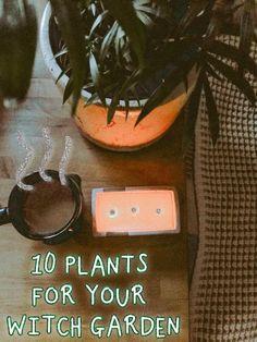 Growing Herbs Indoors, Growing Plants, Witchcraft Herbs, Green Witchcraft, Witchy Garden, Sacred Garden, Indoor Flowering Plants, Plant Magic, Witch Herbs