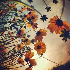 #朝の1枚 One taken in the morningღ 『 Flower Power 』 #sun #sunrise - @phantastic420- #instagram