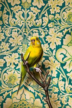Birds and Vintage Wallpaper