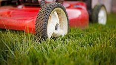 Rasenmähen: Ein guter Rasenmäher und ein paar Tipps zum Rasenmähen sorgen für schönes Grün. (Quelle: Thinkstock by Getty-Images)