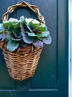 Living wreath for fall --- add lettuces to a flat backed basket   |    source unknown via Horse Country Chic