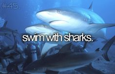 Swim with Sharks #BucketList (I plan to scratch this from my list this summer in Punta Cana)