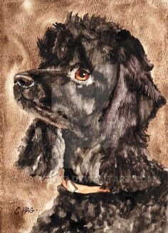 This is the companion piece to the little Bichon Frise painting. It's watercolour by The reference photo I got was a full-body shot, but I decided to go for the portrait look so that th. Poodle Drawing, Flower Painting Canvas, Pet Memorial Gifts, Pekingese Dogs, Gifts For Dog Owners, Animal Quilts, Animal Heads, Bichon Frise, Animal Paintings