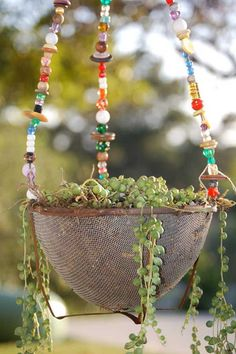 string-of-pearls for hanging baskets! Diy Planters, Hanging Planters, Hanging Baskets, Planter Ideas, Hanging Gardens, Garden Crafts, Garden Projects, Pot Jardin, Garden Junk