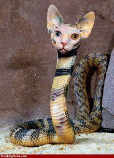 cat head snake body - Google Search