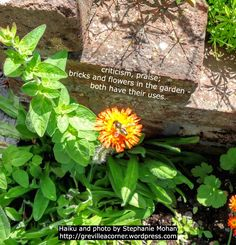 criticism, praise; bricks and flowers in the garden - both have their uses. Haiku and photo for meditation and reflection by Stephanie Mohan - August 2015