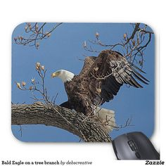 Bald Eagle on a tree branch Mouse Pad