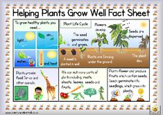 Here's a simple fact sheet on plant growth. Includes a helpful glossary.