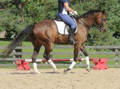 Interpreting the Half-Halt   Horse Listening