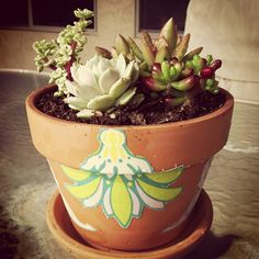 my new succulent garden with a fabric decoupage pot! #diy #crafting