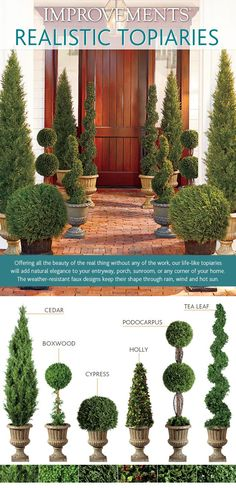 Topiary Guide - 6 Tips to Selecting the Right Topiary from Improvements Blog