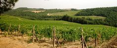 Rocco di Castagnoli ~ Exquisiter Chianti & tolle Toskana-Cuvées - http://weinblog.belvini.de/rocca-di-castagnoli-toskana