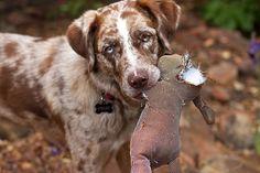 Mit diesen 5 Dingen verletzt Du die Gefühle deines Hundes ohne es zu wissen!