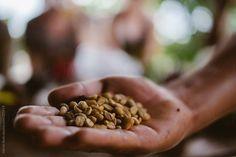 Handful of coffee beans in Peru by Adrian Seah - Stocksy United Coffee Images, Coffee Beans, Peru, Almond, Stuffed Mushrooms, Vegetables, Green, Food, Coffee Pictures
