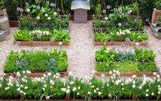 Potager in urban garden : Rustic style garden by Lucy Summers Garden Design