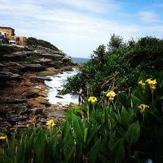 #calm #beauty #peace #peaceful #freedom #bondi #bonditocoogee #bondibeachsydney #tamarama #bronte #sydney #sydneylife #australia #sea #sky #bluesky #flower #flowers #blue #yellow #green #photo by enricoferrari http://ift.tt/1KBxVYg