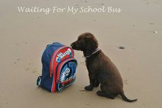 Bless little Jessie at the beach today, great pic by Alan Jeary.