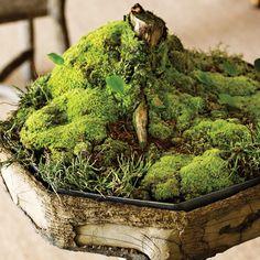 to Take Care of Moss - Moss Garden wedding Terrarium succulentes Terrarium Reptile, Terrarium Plants, Succulent Terrarium, Succulents Garden, Cactus Plants, Terrarium Wedding, Cactus Art, Growing Moss, Gardens