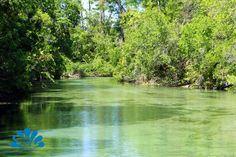 "The pristine Weeki Wachee River gives our guests on the river boat ride, a glimpse into the ""Real Florida"". For those of you who want to experience more of the river, a canoe or kayak trip is well worth the time."