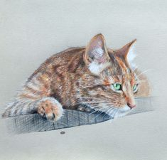 30 Beautiful Cat Drawings - Best Color Pencil Drawings and Paintings | Read full article: http://webneel.com/cat-drawing | more http://webneel.com/drawings | Follow us www.pinterest.com/webneel