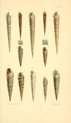 t 6 (1857) - Journal de conchyliologie. - Biodiversity Heritage Library