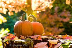 Sugar Pie Pumpkins | Flickr - Photo Sharing!