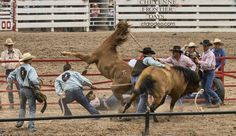 Cheyenne Rodeo / Wild Horse Race / Saddle / Frontier Days / 2012