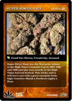 Super Silver Haze | Repined By 5280mosli.com | Organic Cannabis College | Top Shelf Marijuana | High Quality Shatter