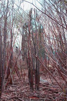 "Scottish sculptor Rob Mulholland has created these beautiful mirrored sculptures for a series he calls ""Vestige. Artistic Installation, Light Installation, Reflective Sculpture, Mirror Artwork, Male Figure, Environmental Art, Art Forms, Modern Art, Street Art"