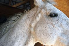 Researchers Study Plant-Based Treatment for Equine Melanoma