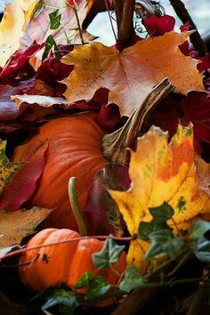 Leaves & pumpkins