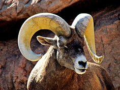 (via 500px / Billy Goat Gruff by Sue Scimeca)