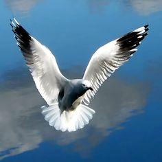 ~~ Angel gull... ~~